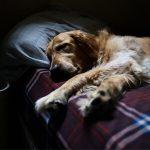 Met je huisdier samen slapen verstandig?