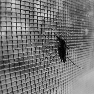 tips muggen voorkomen verstoren nachtrust
